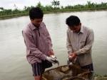Quy chuẩn trong sản xuất giống và nuôi cá rô phi