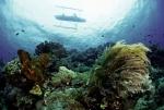 Indonesia: Bảo tồn đại dương cho tương lai