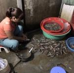Hà Nội: Bắt quả tang bơm tạp chất vào tôm tại chợ đầu mối
