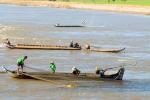 An Giang: Nghiêm cấm khai thác cá linh non dưới 55 mm