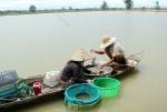 Đồng Tháp: Không mở rộng diện tích nuôi tôm thẻ trong vùng nước ngọt