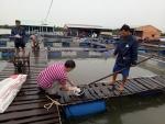 Bà Rịa - Vũng Tàu: Một số giải pháp kỹ thuật nhằm giảm thiệt hại cá lồng bè chết