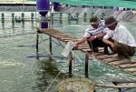 Bình Thuận: Cung cấp 18,5 tỷ tôm giống