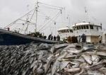 Hiện tượng nước biển nóng lên làm kích cỡ cá biển giảm