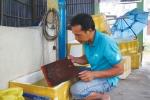 Thành công từ nghề ương cá bột