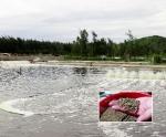 Hà Tĩnh: Làm giàu từ nuôi ốc hương