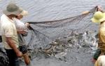 Lâm Đồng: Hiệu quả nhờ đa dạng đối tượng thủy sản nuôi