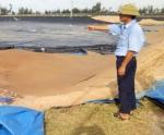 Thủy sản chịu thiệt hại nặng nề từ bão số 10