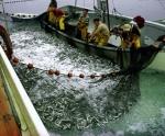 Mỹ: Sáng kiến nâng cao giá trị thủy sản