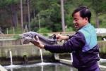 Hiệp hội Phát triển cá nước lạnh Lâm Đồng: Xây dựng thương hiệu cá nước lạnh