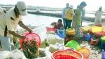 Ða dạng hóa thị trường xuất khẩu tôm và cá tra