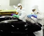 Bứt phá xuất khẩu cá ngừ sang Mỹ