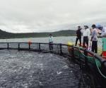 Nuôi cá lồng công nghiệp bằng công nghệ Na Uy