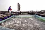 Nigeria: Nuôi thủy sản thân thiện môi trường