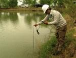 Quảng Ngãi tìm nguyên nhân cá chết hàng loạt