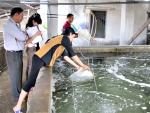 Cần nâng cao chất lượng giống thủy sản