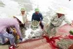 Sản xuất thủy sản đạt khá, tổng sản lượng tăng 4,5%