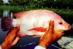 Công nghệ sinh học: Đòn bẩy cho ngành thủy sản Ấn Độ