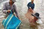 Bến Tre: Phát huy thế mạnh kinh tế thủy sản