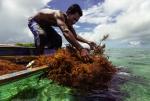Philippines quan tâm nghề rong biển