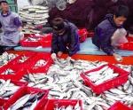 Nói không với đánh bắt hải sản bất hợp pháp