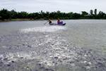 Cá tra sạch từ ao nuôi đến bàn ăn