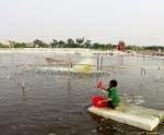 Ninh Bình: Giàu tiềm năng nuôi trồng thủy sản