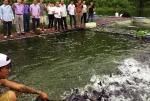 Cao Bằng: Thử nghiệm với cá lăng trong lồng