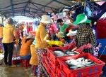Bảo quản cá nục bằng chế phẩm sinh học: Cần nhân rộng