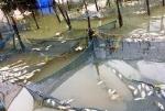 81 tấn cá ở 1.300 lồng nuôi của 360 hộ chết trắng, thiệt hại hơn 8 tỷ đồng