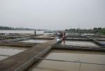 Hà Nội: Báo động 'đỏ' ô nhiễm ao hồ