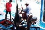 """Khắc phục """"thẻ vàng"""" của EU đối với hải sản xuất khẩu"""