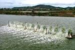 Tiêu chuẩn VietGAP trong thủy sản Việt Nam có giá trị toàn cầu