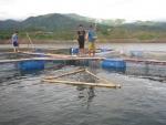 Quảng Bình: Phát triển nuôi cá trắm lồng bè