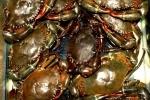 Phục tráng và phát triển nguồn gen hai loài thủy sản