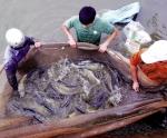 """Năm 2017, thủy sản sạch Việt """"lên ngôi"""""""
