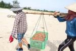 Ngư dân Nghệ An được mùa tôm, ruốc biển