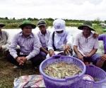 Cà Mau: Thành công từ chuỗi giá trị ở Cái Bát
