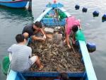 Khánh Hòa: Nông dân phường Cam Thuận lãi đậm nhờ nuôi tôm hùm xanh