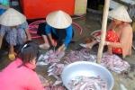 Đặc sản khô cá tất bật vào mùa tết