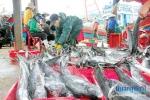 Ghi nhật ký khai thác thủy sản: Ngư dân còn lơ là