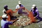 Thủy sản việt nam 2018: Tiếp đà tăng trưởng