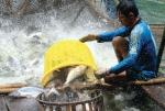 Mức thuế DOC đưa ra đối với cá tra Việt Nam là không khách quan