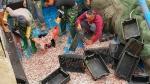 Nhiều ngư dân trúng đậm cá cơm biển ngày giáp tết