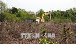 Vụ phá rừng nuôi sò huyết tại Cà Mau: Rà soát việc giao, cho thuê đất để nuôi trồng thủy sản