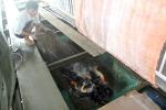 Nuôi cá hô đặc sản trong bè, cuối năm nông dân hốt bạc, ăn Tết to