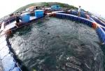Thủy sản Việt: qua góc nhìn chuyên gia