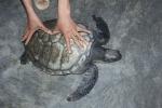 Quảng Bình: Trả ngư dân 1 triệu giải cứu rùa biển quý hiếm
