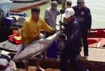 Phú Yên: Nhiều kỳ vọng cho chuyến biển đầu năm