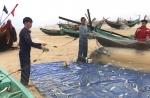 Quảng Bình: Ngư dân bội thu cá trích